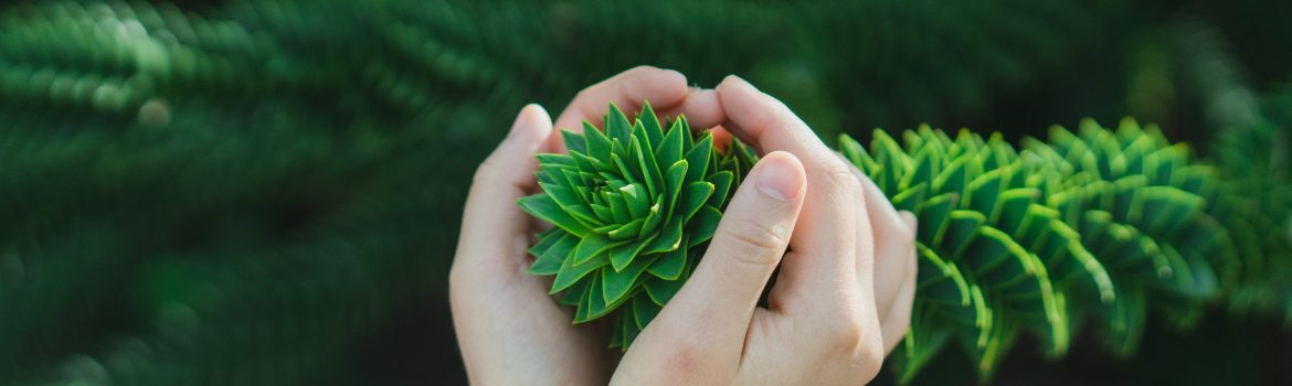 Hand holding a leaves of pine needles. This way we are trying to inspire with love to nature by BuyEssayFriend.