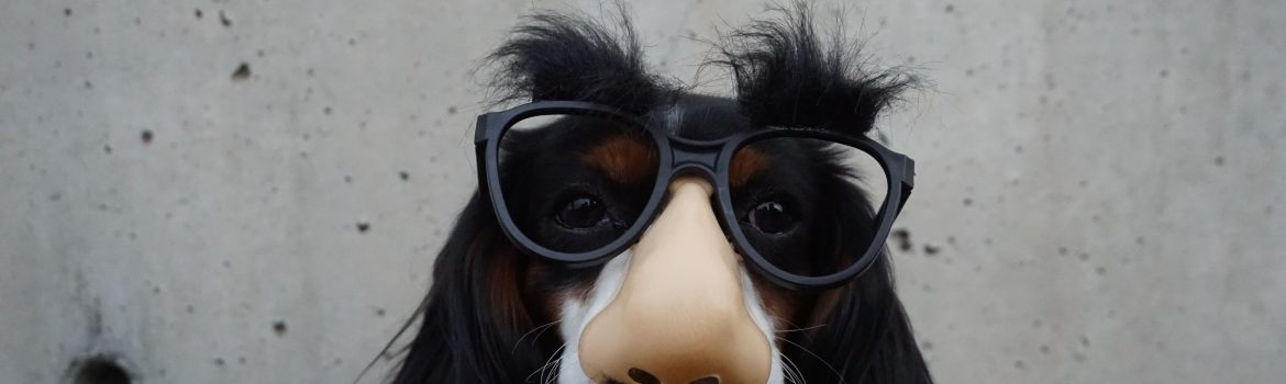 A dog with mask of eye glasses and big nose sitting straight.